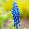 Stock Image :  Flores azuis