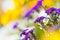 Stock Image : Flores coloridas