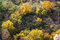 Stock Image :  Floresta colorida do outono