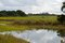 Stock Image : Florida marsh land