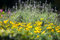 Stock Image : Flower background.