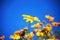 Stock Image : Flower
