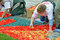 Stock Image : Flower Carpet on Grand Place