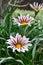 Stock Image : Flower close up
