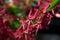 Stock Image : Flower Closeup