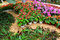 Stock Image : Flower garden