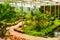 Stock Image : Flower garden