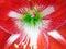 Stock Image : Flower stamen