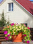 Stock Image : Flowerpot with petunia flowers near a home