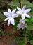 Stock Image : Flowers