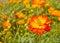 Stock Image : Flowers in the garden