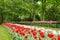 Stock Image : Flowers garden