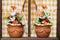 Stock Image : Flowers on window vintage
