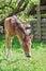 Stock Image : Foal