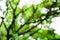 Stock Image :  Fondo verde del árbol de la falta de definición