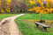 Stock Image : Footpath and bench in autumnal park.