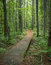 Stock Image : Forest Path