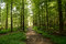 Stock Image : Forest Pathways