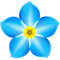 Stock Image : Forget-me-not