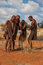 Stock Image : Four bushmen dancing