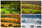Stock Image : Four seasons