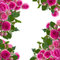Stock Image : Frame of pink roses brunches close up
