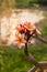 Stock Image : Frangipani Flower under sun light