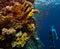 Stock Image : Freediver