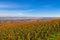 Stock Image : French vineyard