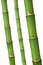 Stock Image : Fresh bamboo stems with wated drops
