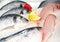 Stock Image : Fresh fish