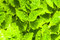 Stock Image : Fresh green leafs background
