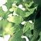 Stock Image : Fresh green leaves background