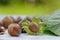 Stock Image : Fresh hazelnuts