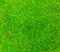 Stock Image : Fresh lichen field