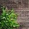 Stock Image : Fresh  mint leaves