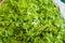 Stock Image : Fresh Organic Vegetables