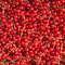 Stock Image : Fresh ripe red currants background