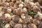 Stock Image : Freshly harvested yellow onions