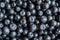 Stock Image : Freshly picked blueberries