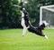 Stock Image : Frisbee dog catching