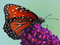 Stock Image : Butterfly