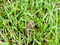 Stock Image : Frog in Grass
