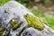 Stock Image : Frog on Rock