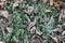 Stock Image : Frozen fallen leaves on grass