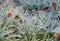 Stock Image : Frozen Flowers