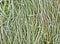 Stock Image : Frozen grass