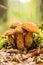 Stock Image : Fungi