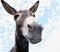 Stock Image : Funny Donkey