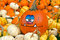 Stock Image : Funny face pumpkin in gourds